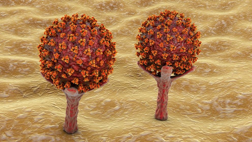 bigstock-covid-ace-receptors